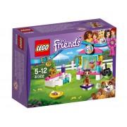 Rasfatul Catelusilor (41302)