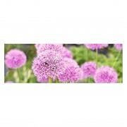 Afbeelding Pink Meadow -150x50cm, Pro Art