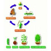 Learning Resources - Juguete educativo de biología (EI-1761) (versión en inglés)