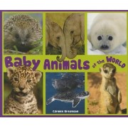 Baby Animals of the World by Carmen Bredeson