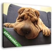 Shar-pei kutya a díványon (35x25 cm, Vászonkép )
