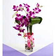 3 Orhidee