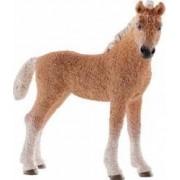 Figurina Schleich Bashkir Curly Foal