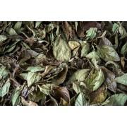 Chá de Folhas de Arando/Mirtilo