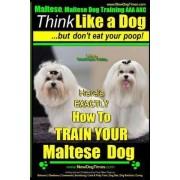 Maltese, Maltese Dog Training AAA Akc by MR Paul Allen Pearce