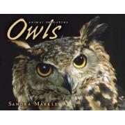 Owls by Sandra Markle