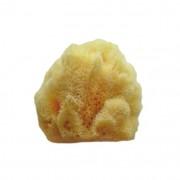 Svamp för exfoliering av ansiktshy, Hardhead, 7.5-9 cm