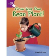 Rigby Star Guided Quest Purple: Grow Your Own Bean Plant!