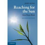 Reaching for the Sun by John King