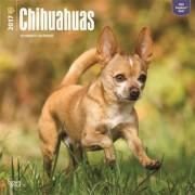 2017 kalender met Chihuahua honden
