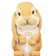 Little Bunny by L Rigo
