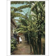 California View Of Banana Trees In Front Of A Home (Playing Card Deck 52 Card Poker Size With Jokers)
