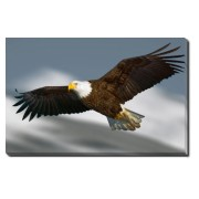 Tablou Canvas Vultur in Zbor