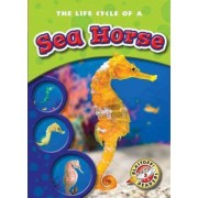 The Life Cycle of a Sea Horse by Colleen Sexton