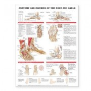 Anatomy and Injuries of the Foot and Ankle by Anatomical Chart Company