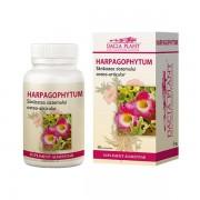 Harpagophytum Dacia Plant