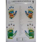Kéz reflexzónái - Bánszky Judit A3-as