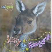 Lifecycles - Joey to Kangaroo