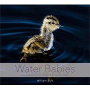 Water Babies the Hidden Lives of Baby Wetland Birds by William Burt