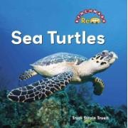 Sea Turtles by Trudi Trueit