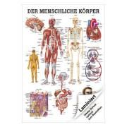 """Lehrtafel """"Der menschliche K?rper"""", LxB 100x70 cm"""