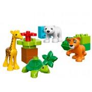 LEGO® DUPLO® Puii de animale - 10801