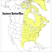Field Guide to Eastern Butterflies by Paul A. Opler
