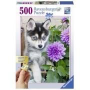 Ravensburger puzzle catel husky, 500 piese