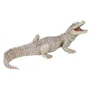 White Baby Crocodile