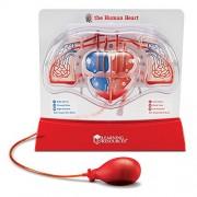 Learning Resources - Modellino di cuore umano, con pompetta per simulare il battito