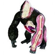 Famemaster 4D Vision Gorilla Anatomy Model
