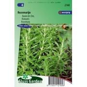 Rozemarijn (Rosmarinus officinalis) zaad, kruidenzaden