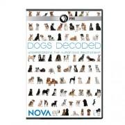 Nova: Dogs Decoded [Reino Unido] [DVD]