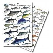 Guide to Game Fish of the Atlantic Ocean