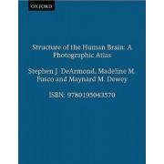 Structure of the Human Brain by Associate Professor of Pathology Stephen J DeArmond