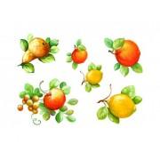 Decor transferabil fructe Maimeri