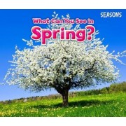 What Can You See In Spring? by Sian Smith
