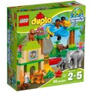 10804 Jungle