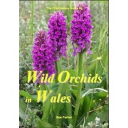 Wild Orchids in Wales by Sue Parker