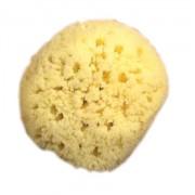 Gul Havssvamp, 13-14 cm