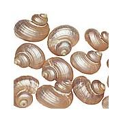 Silver/Pearl Turbo Shells