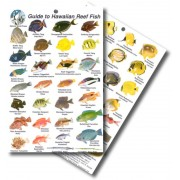 Guide to Hawaiian Reef Fish