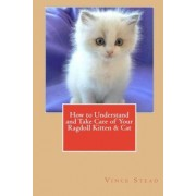 How to Understand and Take Care of Your Ragdoll Kitten & Cat by Vince Stead