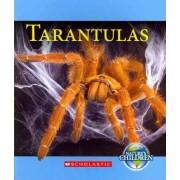 Tarantulas by Vicky Franchino