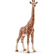 Schleich - 14750 - Figurine haute qualité - Girafe Femelle