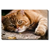Tablou Canvas Garfield