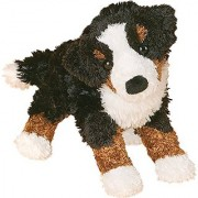 Miranda Bernese Mountain Dog