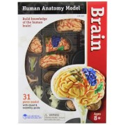 Learning Resources Anatomy - Modello di cervello, 9,6 cm