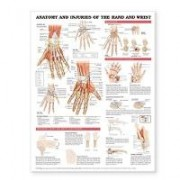 Anatomy and Injuries of the Hand and Wrist Anatomical Chart by Anatomical Chart Company
