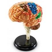 Learning Resources - Modèle De Cerveau - Langue: Anglais Import Grande Bretagne